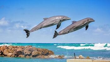 Entrada al Dolphin Park en Ocho Ríos
