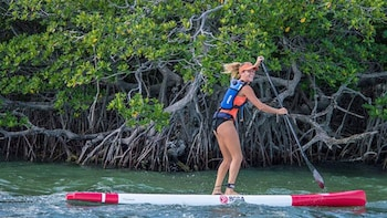 Guided Florida Keys Eco Tour by Kayak or Paddleboard