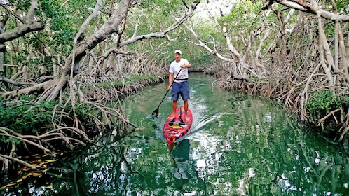 A man paddle boards on an overgrown river.