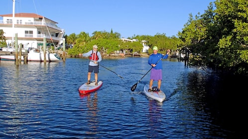 Two people on paddle boards out in the water