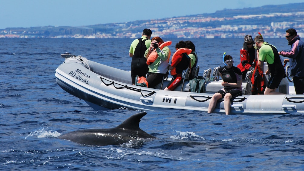 Show item 2 of 5. Two dolphins at the surface of the water with a boat full of divers in the background