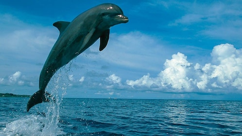 Close up of dolphin jumping out of water.