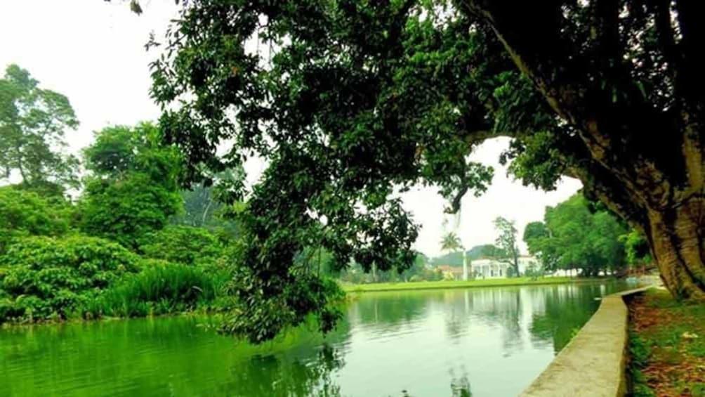 Show item 10 of 10. A river running through a Botanical garden