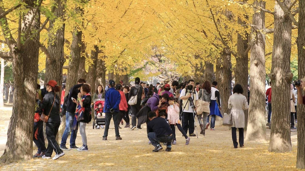 Show item 3 of 4. Beautiful yellow trees and a street full of people in Seoul