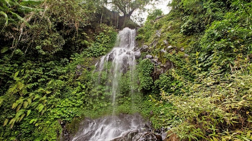A waterfall shrouded in jungle canopy