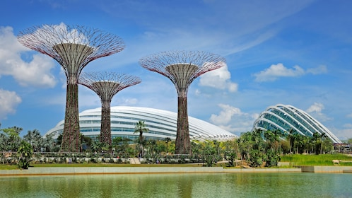 interesting tree like structures in singapore