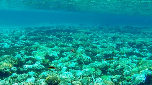 Blue ocean water and coral