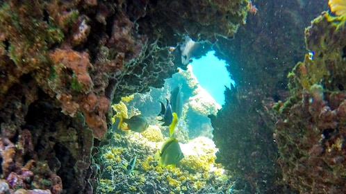 Coral cave with fish