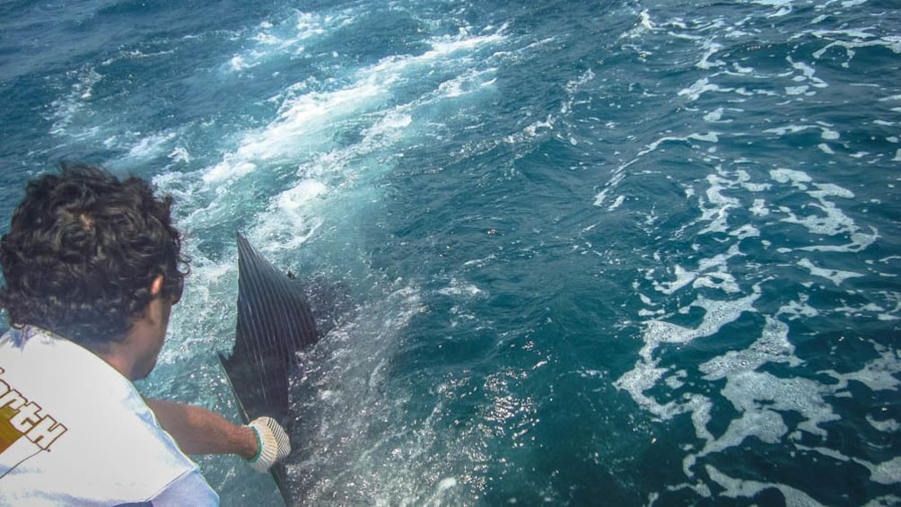 Man pulling exotic fish out of ocean.