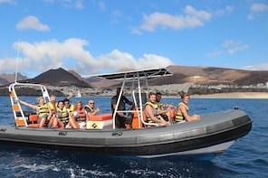 1.5-Hour Dolphin and Whale Watching Tour