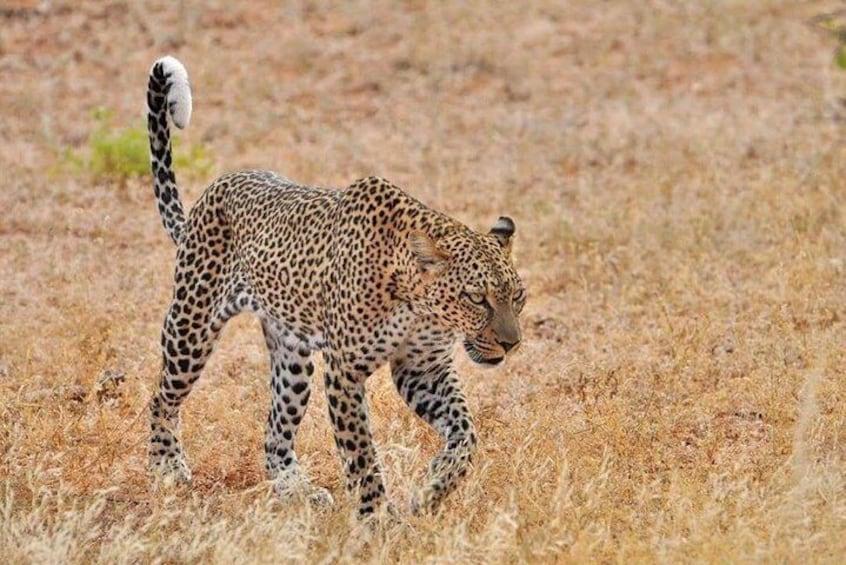 Nairobi National Park, David Sheldrick and the Giraffe centre day trip