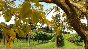 Southern Highlands Private Tour with Wine Tasting or Garden