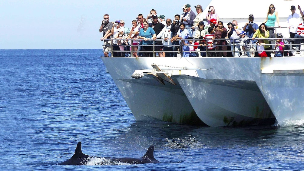 Show item 1 of 5. Group on a boat tour of Port Stephens in Australia