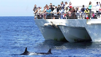 Private Day Trip to Port Stephens with Dolphin-Watching Cruise