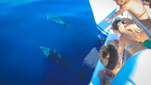 View of people observing swimming dolphins from boat.