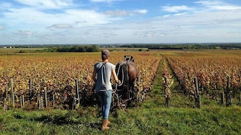 Private Full-Day Côte de Nuits Wine Tasting Tour