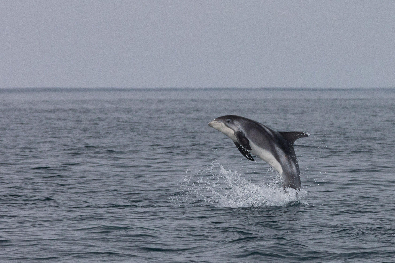 Kombinasjon av hval- og lundefuglsafari i båt
