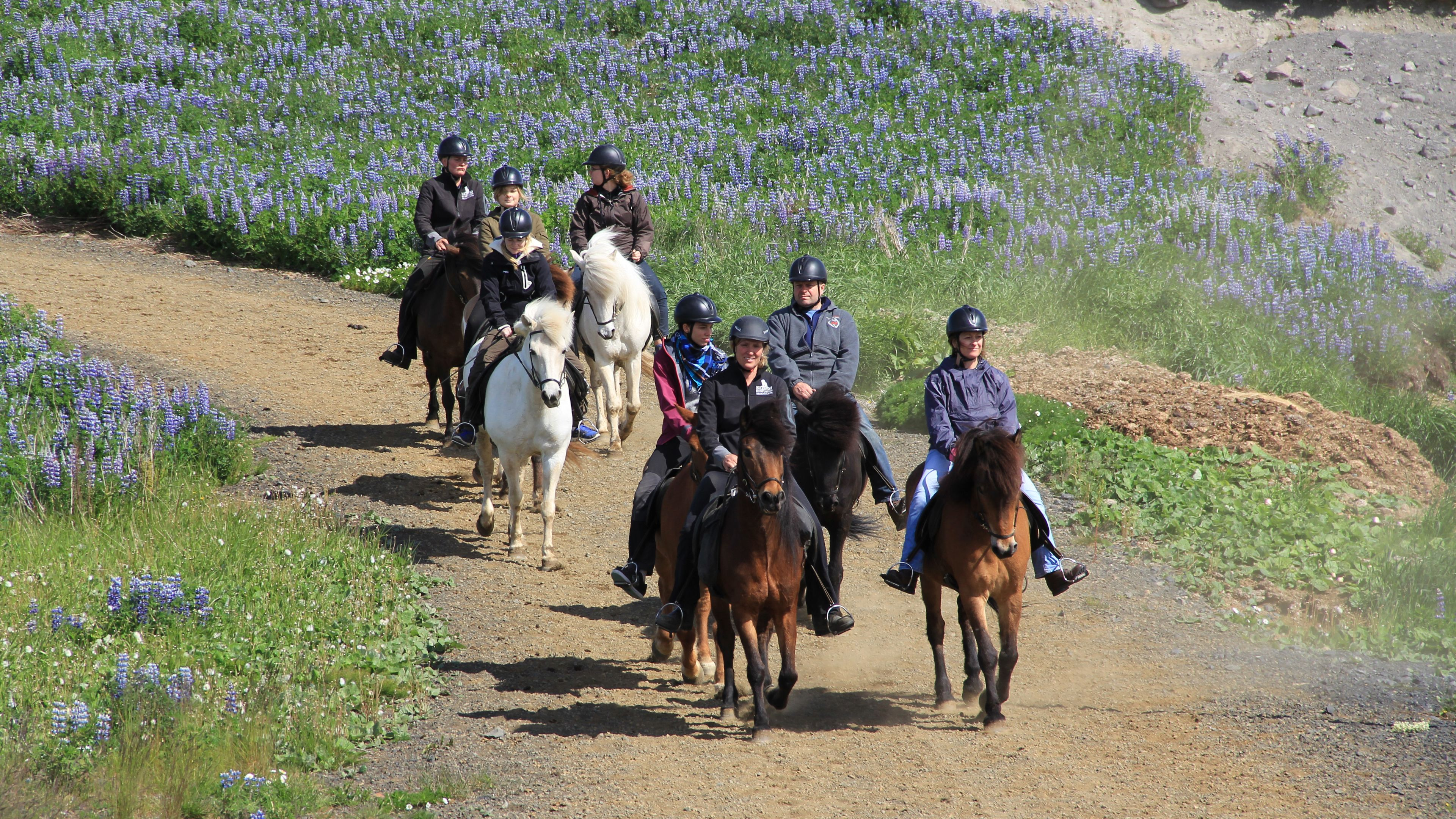 Group of horse back riders