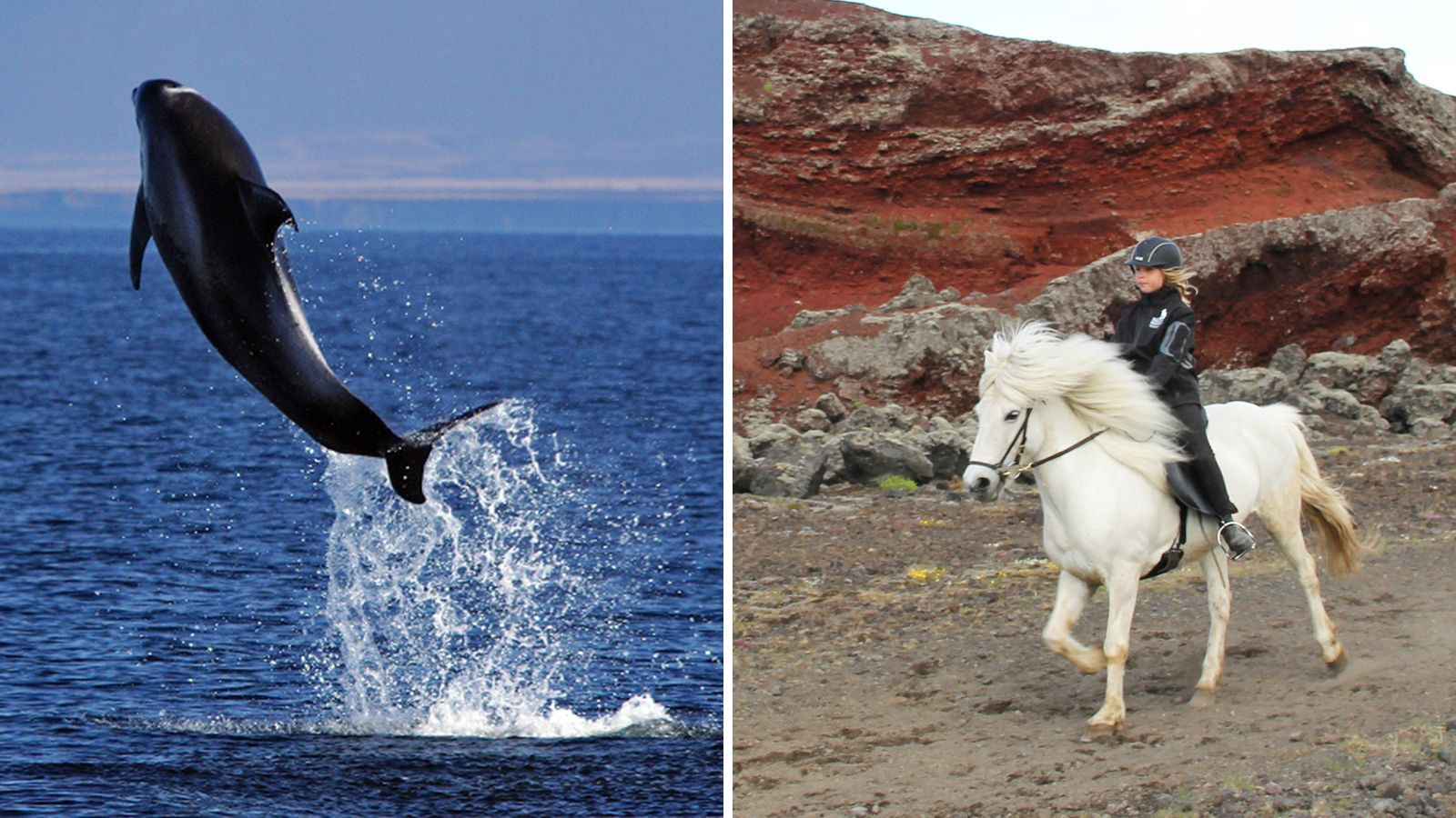 Combo image of horses and whales