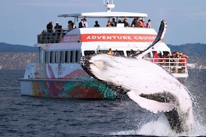 World class Whale Watching from Hervey Bay