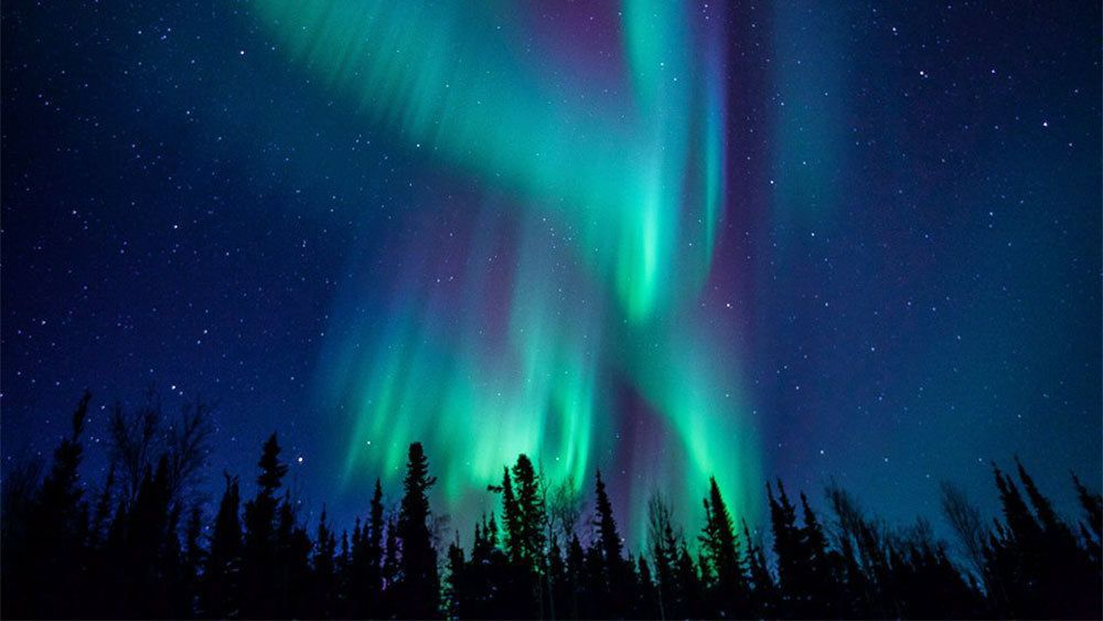 Silhouette of trees against the northern lights in Fairbanks