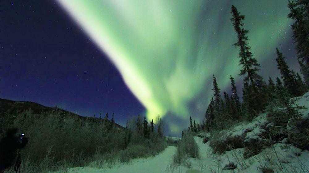 Northern lights over the trees in Fairbanks
