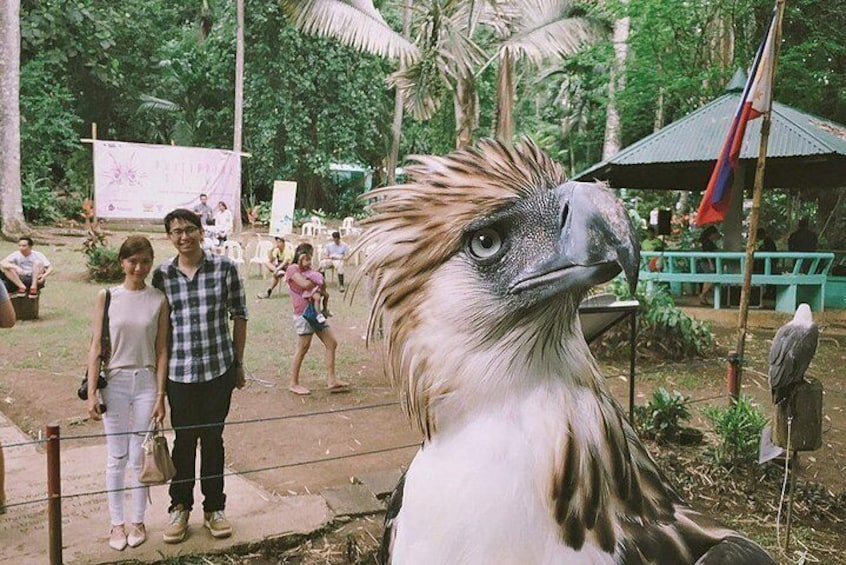 Davao City Tour W/ Philippine Eagle