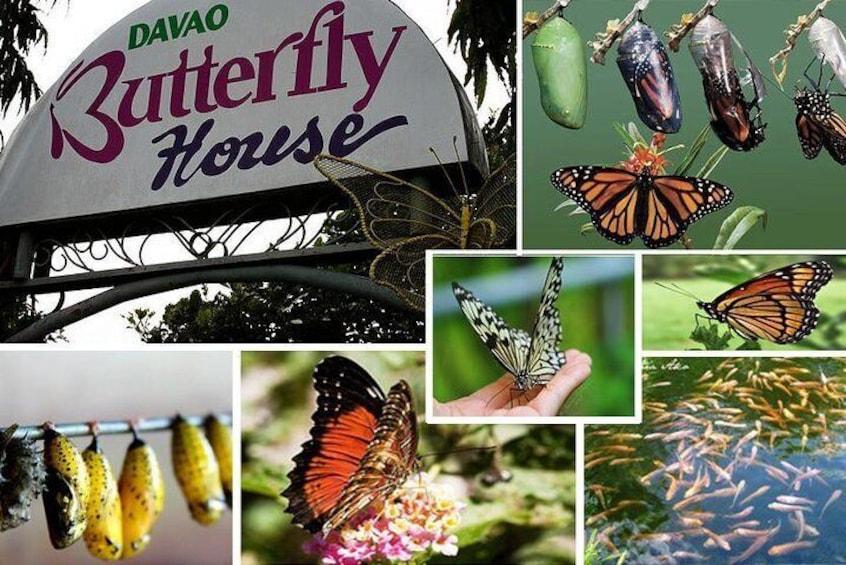 Davao Wildlife Tour