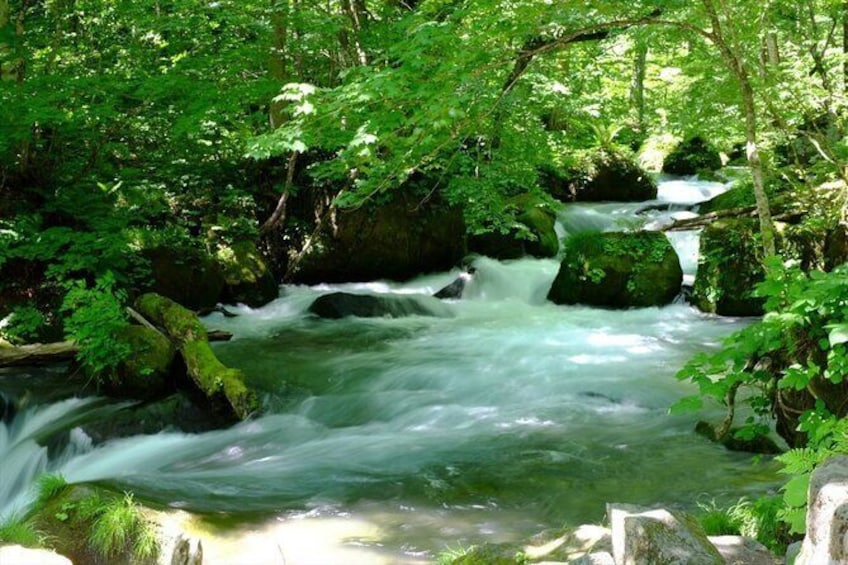 Show item 1 of 6. Oirase Gorge and Lake Towada Day Hike with Government-Licensed Guide