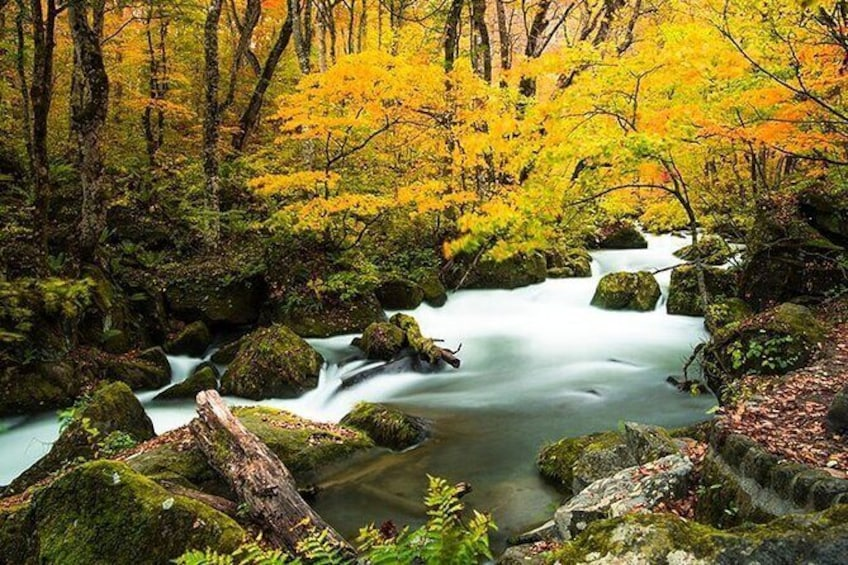 Show item 2 of 6. Oirase Gorge and Lake Towada Day Hike with Government-Licensed Guide