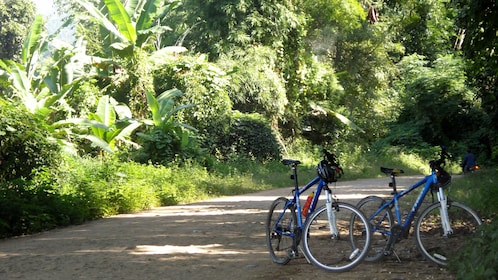 Two parked bicycles on path shown in front of forest area.