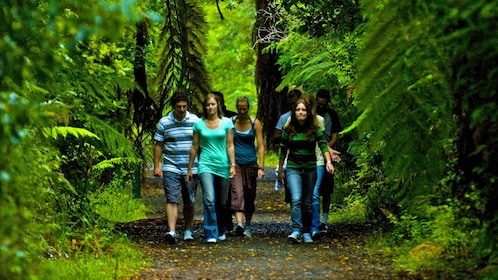 group walking along a forested trail in New Zealand