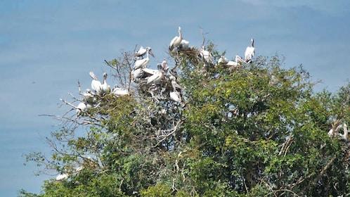 Birds in tree in cambodia