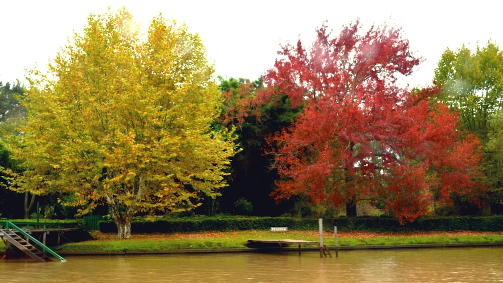 yellow and red trees at shoreline