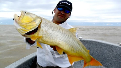 Man in a fishing boat holds up a large yellow fish