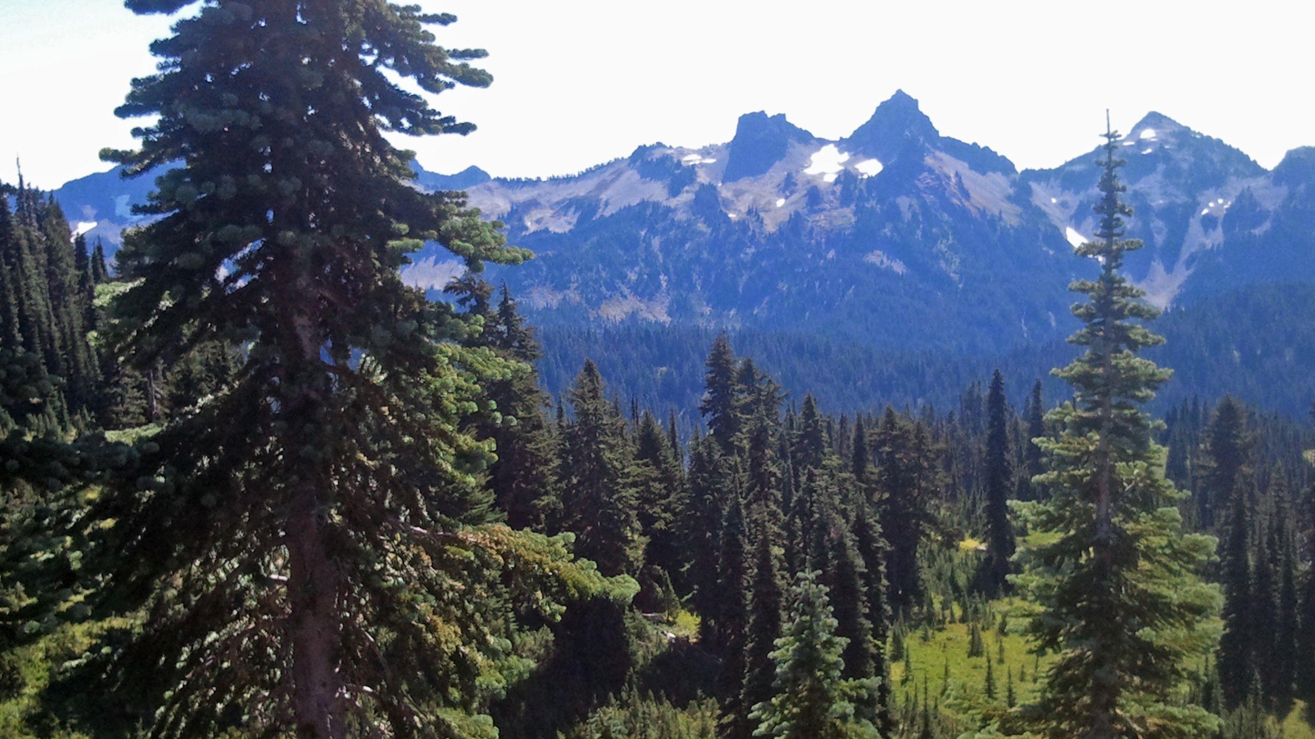 mountain view near seattle