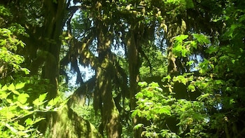 Full-Day Olympic National Park at Quinault