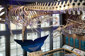 2:00 pm Timed-Entry Visit to New Bedford Whaling Museum