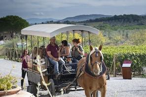 Exclusive & Private Tour - The Secret Wines of Suvereto
