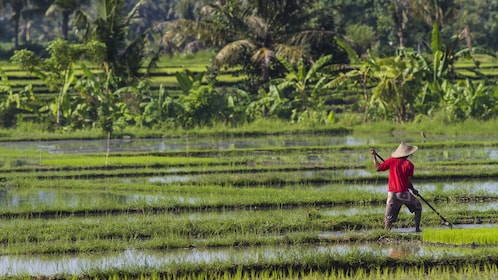 person in red shirt working in field in bali