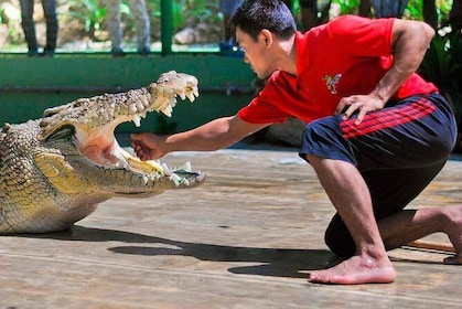Crocodile Adventureland Admission Ticket