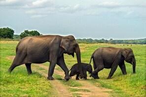 Udawalawe National Park Safari from Balapitiya