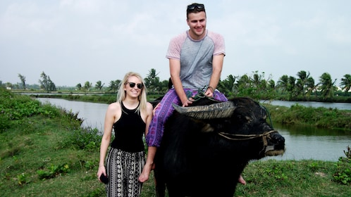 Man rides an Ox in Hoi