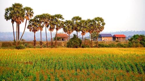 acres of farmland in Cambodia