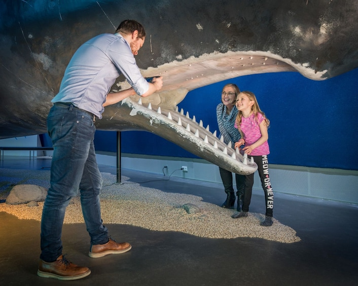 Carregar foto 4 de 5. Whales of Iceland  A Giant Experience