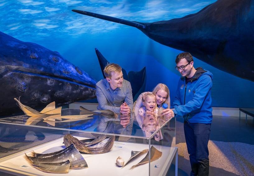 Carregar foto 5 de 5. Whales of Iceland  A Giant Experience