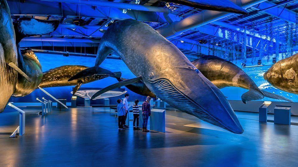 Whales of Iceland – en enorm upplevelse