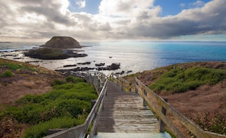 Full-Day Bus Tour Phillip Island Wildlife and Brighton Beach