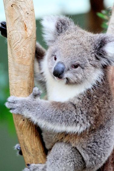 Show item 3 of 7. Phillip Island Wildlife And Brighton Beach Boxes Private Car