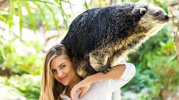 Zoo Explorer-pakke på Bali Zoo